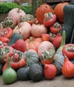 Pumpkins cropped