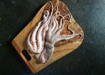 Gragnano (paccheri pasta) with octopus ragu'